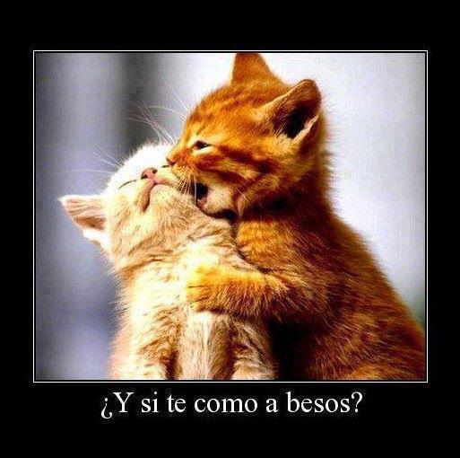 Gatos Amorosos Con Frases Gatos Con Frases de Amor
