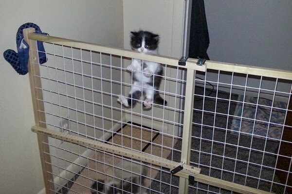 Funny cats - part 97 (40 pics + 10 gifs), cat pictures, kitten climbs fence
