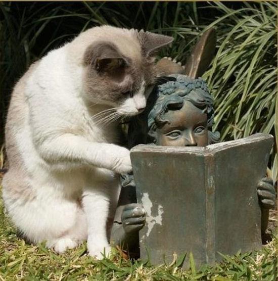 gatto che legge