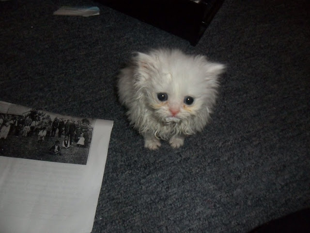 Funny cat pictures part 14, cute kitten