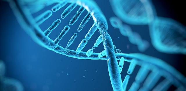Acidos nucleicos, ADN y biologia