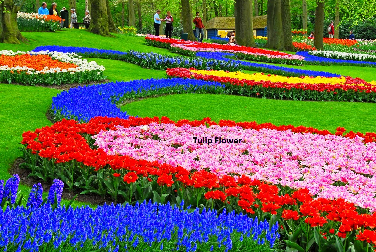 Best places to travel the beautiful and the best place to travel in can you imagine about beautiful garden with full of various flower inside it if you are there you will feel like in paradise it can be true if you visit izmirmasajfo