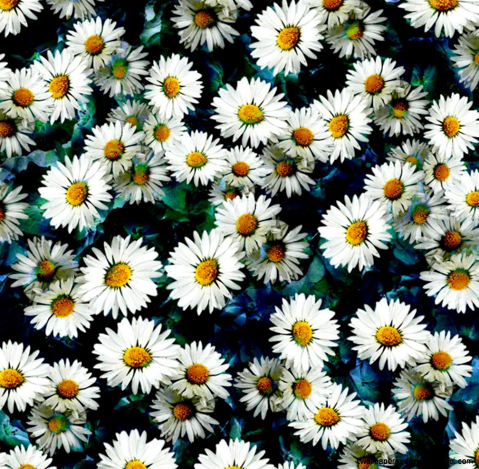 Daisy Background Quotes QuotesGram