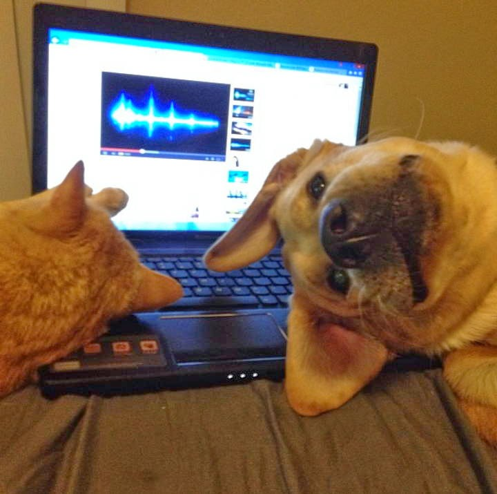Funny animals of the week - 5 April 2014 (40 pics), dog and cat sleeps on laptop