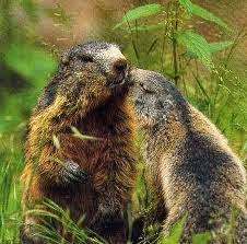 Venez prendre le temps d'écouter chanter  les Marmottes