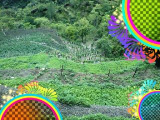 Fields At Bhagori Village, Fakot, Uttarakhand