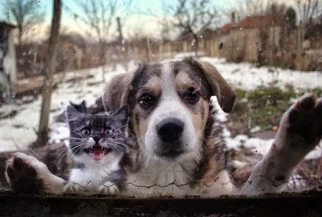 These 22 Adorable Animals Are Begging You To Let Them In
