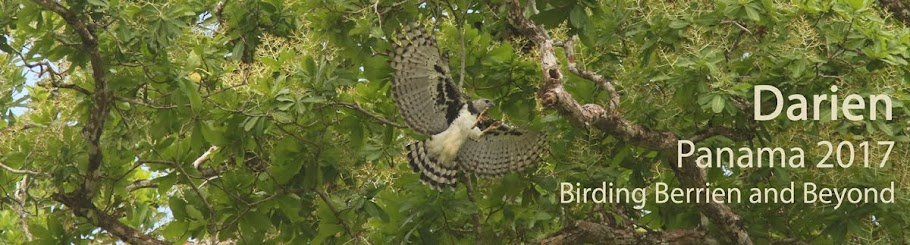 Birding Berrien and Beyond