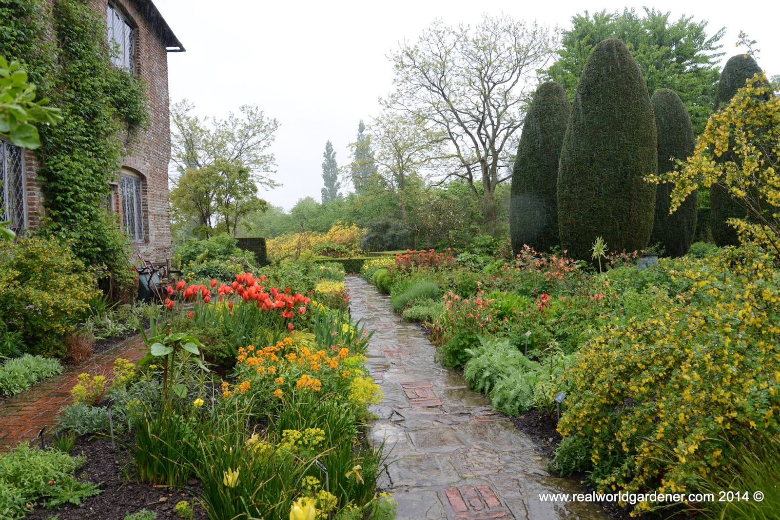 Real world gardening cut flower gardening in design elements for Best flowers for cutting garden