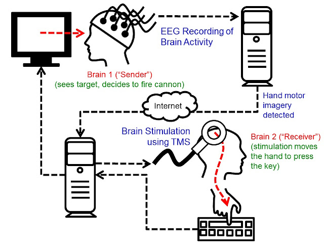 human brain-to-brain interface