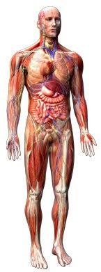 Human body - disorders