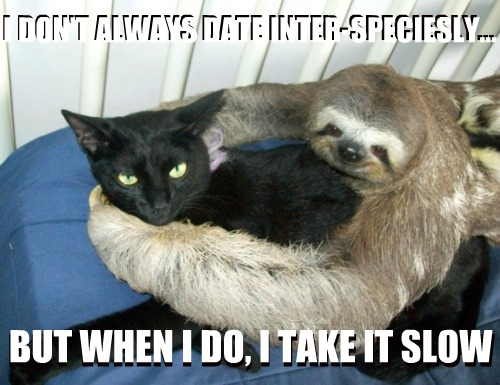 Online dating meme funny cat