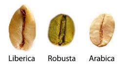 三種咖啡豆之特徵