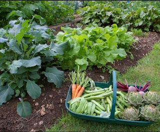 Cara Memanfaatkan Lahan Sempit untuk Berkebun