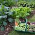 Cara Memanfaatkan Lahan yang Sempit untuk Berkebun