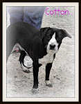 11/25/11 Dogs Needing Homes Rural GA Shelter. NO PUBLIC ADOPTION