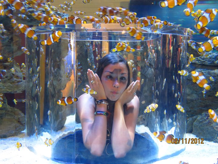 Keira 39 s cape town journal two oceans aquarium i found - Aquarium nemo ...