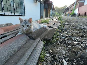 Meow-Meow Tyga