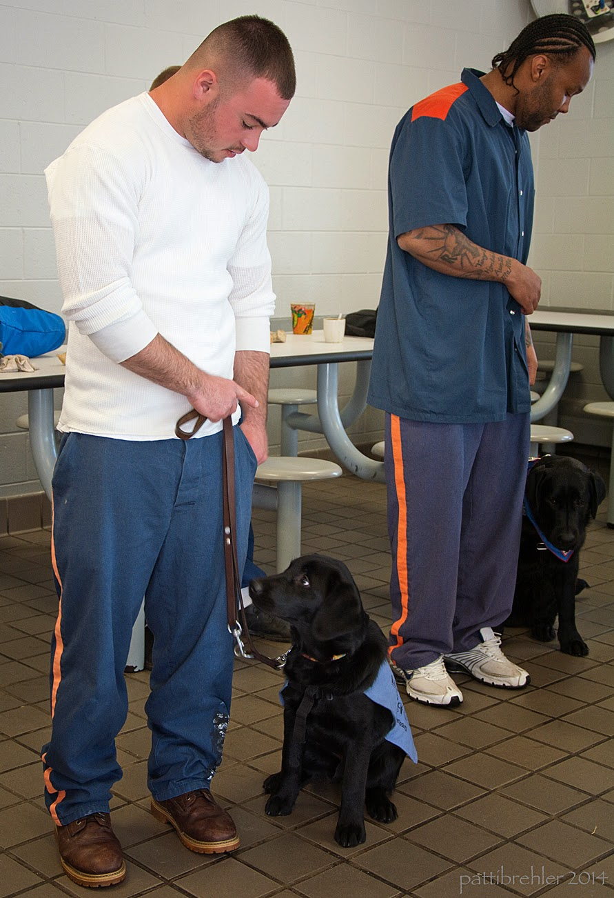 Two men stand with black labs sitting at their left sides. Both men are looking down at the puppies. The first man, on the left, is wearing blue pants and a white t-shirt. The puppy is wearing a baby-blue working jacket and is facing him slightly. The other man on the right is african american and is wearing the blue pants and shirt prison uniform. His puppy is looking up at him. There are lunch tables in the background.