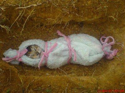 tidak tahlilan sama saja mengubur kucing mati..? | Meraih Ilmu Syar\'i