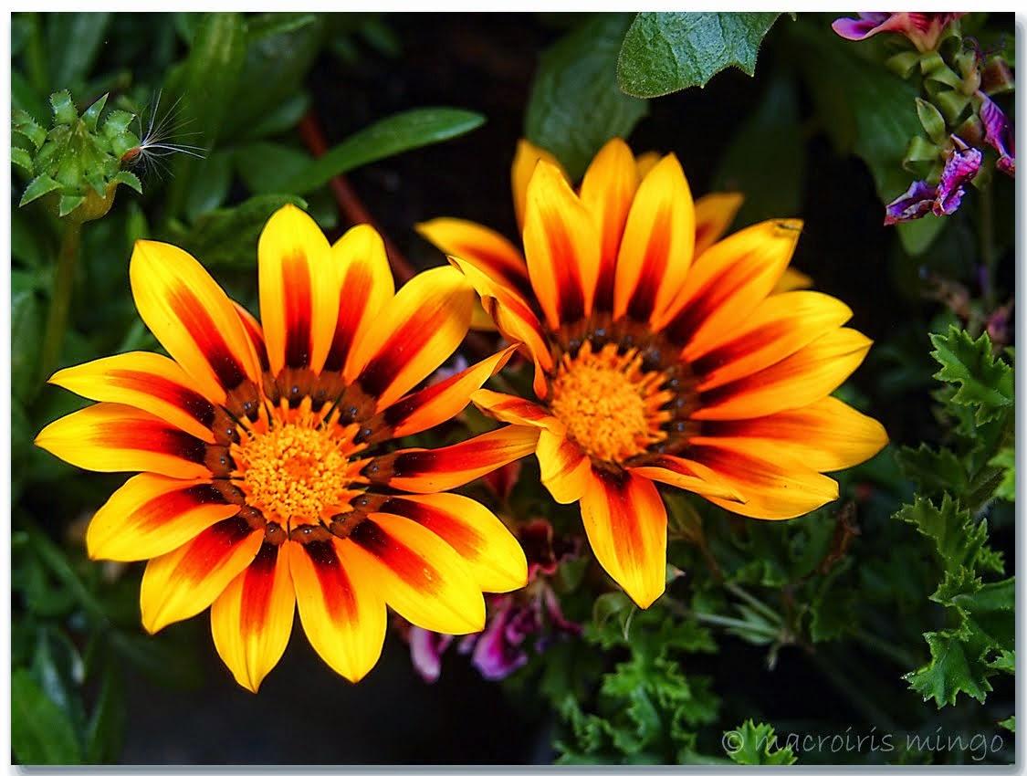 Las plantas plantas ornamentales for Algunas plantas ornamentales
