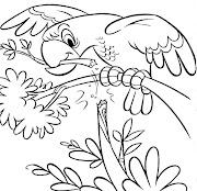 Desenhos para desenhar, colorir, pintar, peixes, papagaio, passaros, imagens (desenho de papagaio para colorir desenhos infantil de animais)