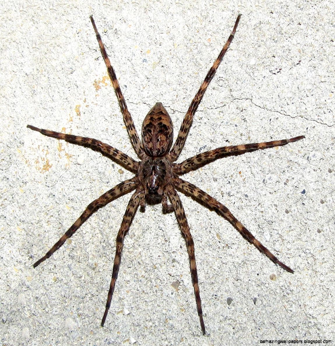 Pictures of Spiders