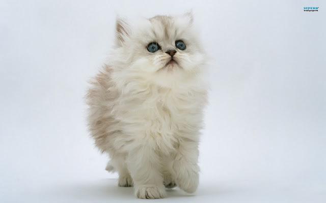 Cute Pussy Cat 37