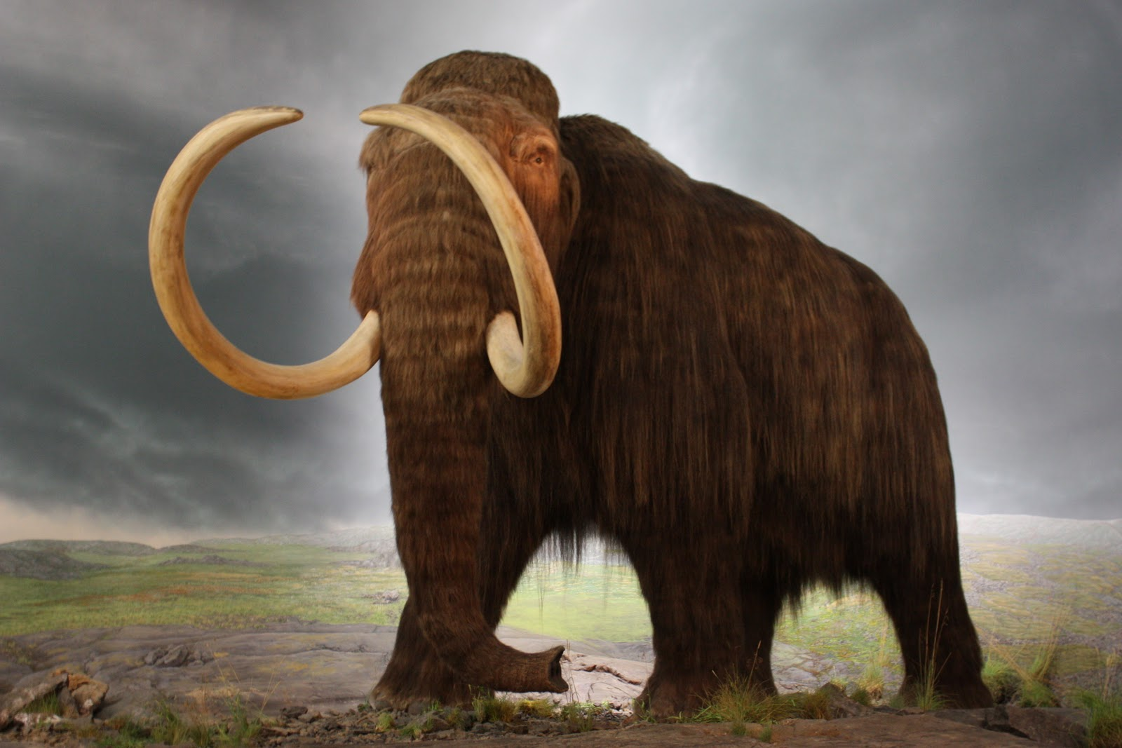 wooly mammoth by silentravyn - photo #14