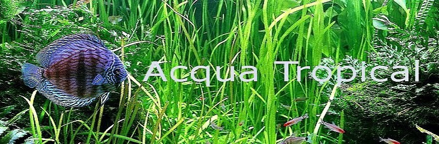 Acqua Tropical