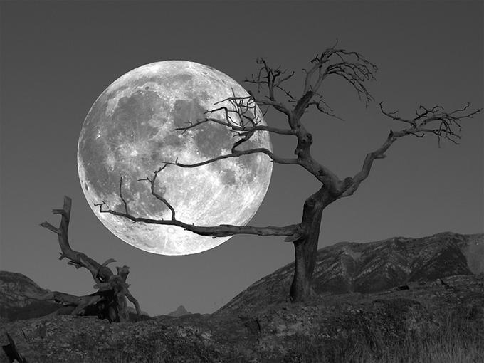 the moon and the yew tree