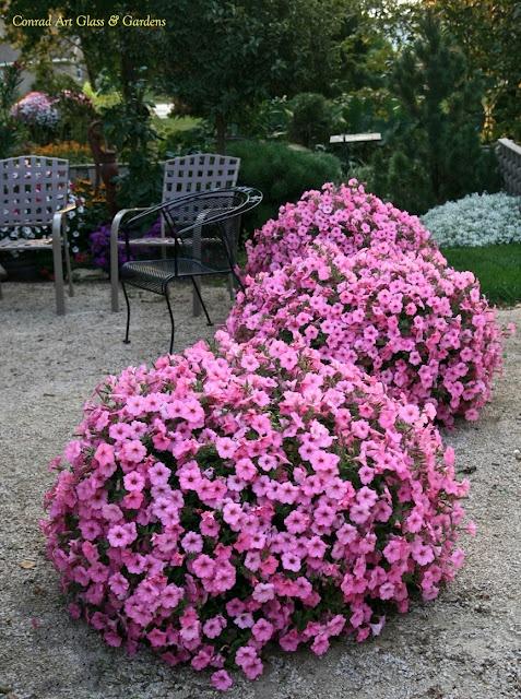 Replantar todo ano, para ter sempre lindas flores