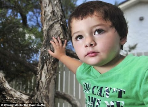 Australian mum finds SEVEN deadly vipers in her three-year-old son's wardrobe where he had put some eggs he'd found in the garden
