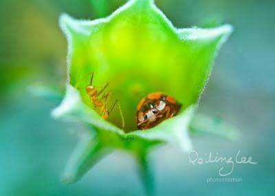 insectos realidad aumentada