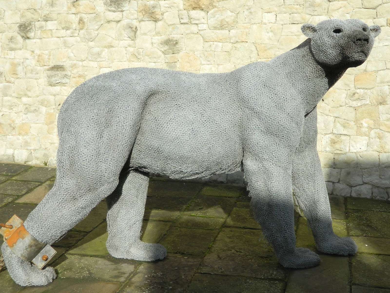 Dog That Looks Like A Polar Bear Tower of london  polar bearsWhite Dog That Looks Like A Polar Bear