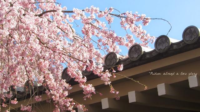 Sakura, Daigoji
