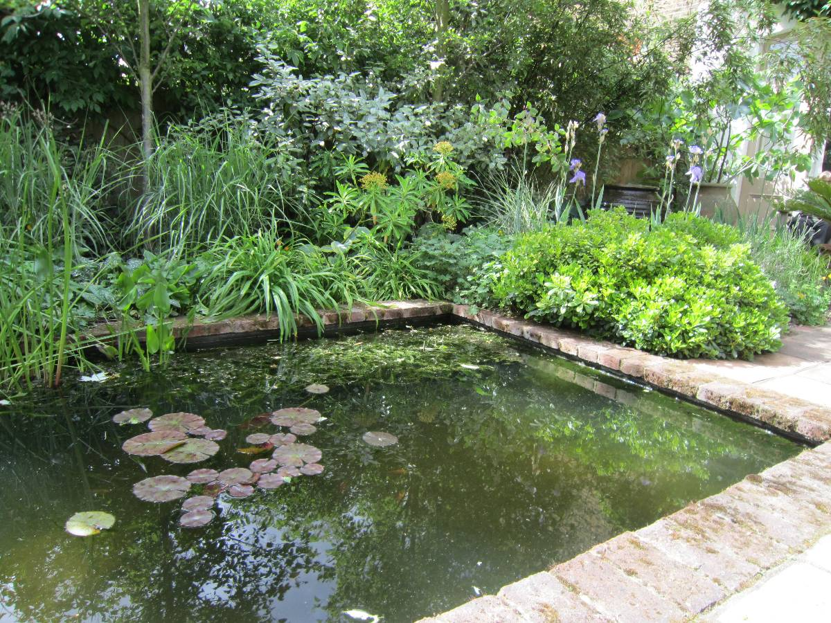 I Need A New Pond Which Will Look Like This