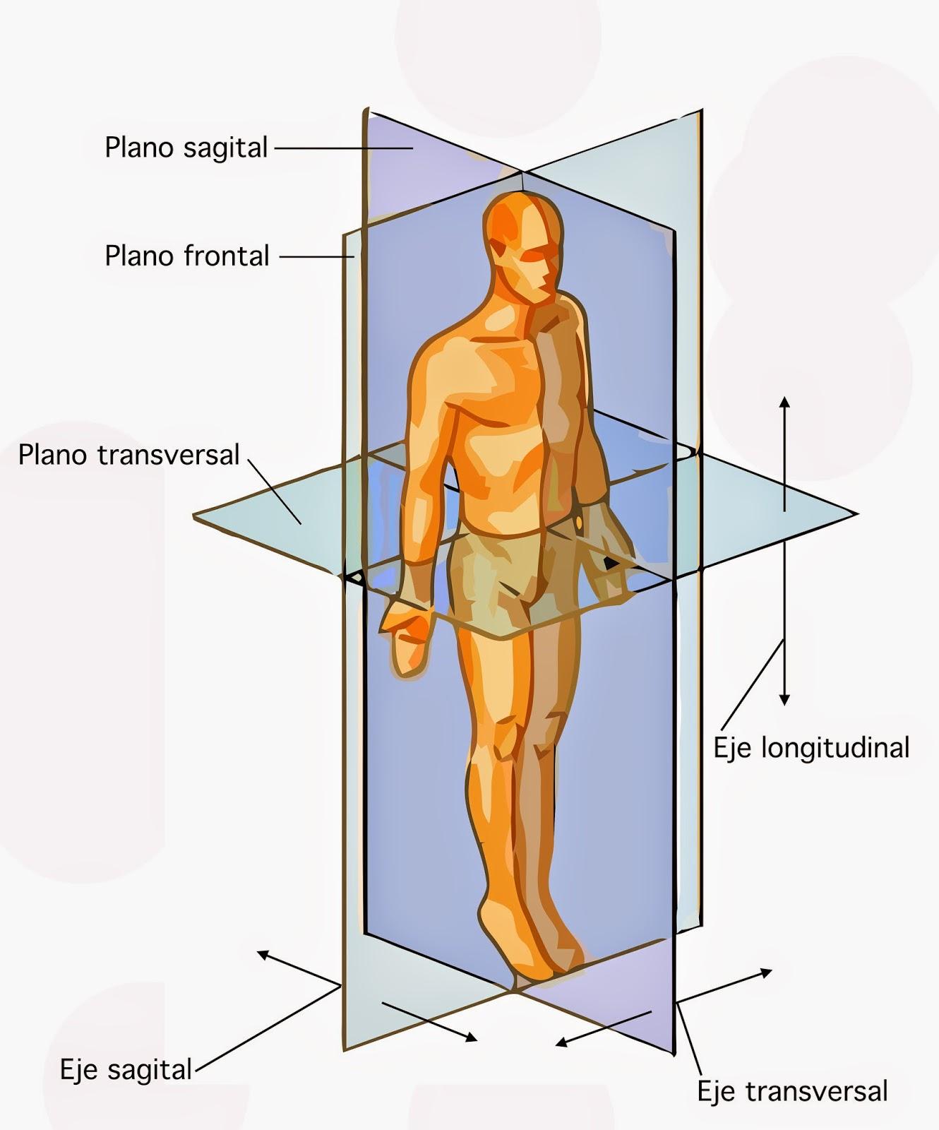 Introducción a la Anatomía | Cátedra de Anatomía UCE