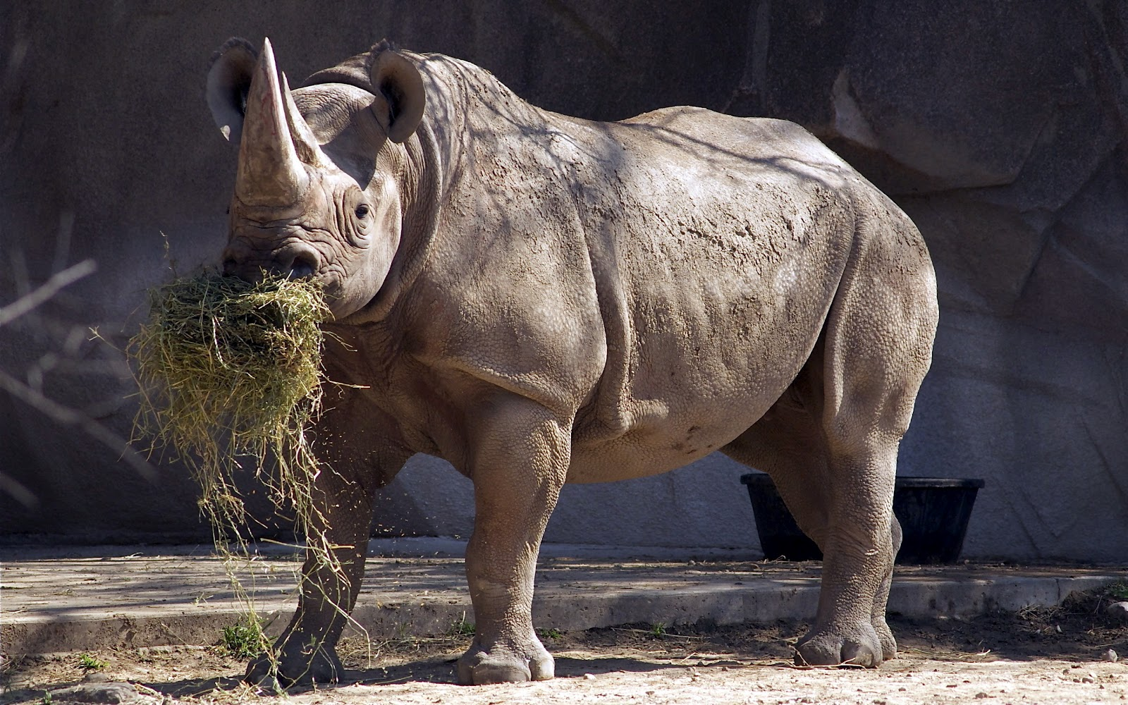 Wallpapers Animal Rhino