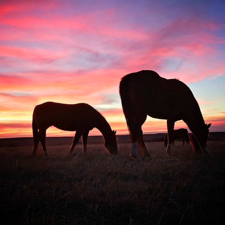 Horses by The Pioneer Woman