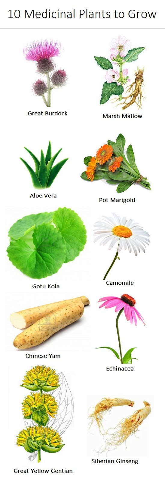 10 herbal medicine Certain herbs hold medicinal properties that promote healing for the body learn about the 30 most popular medical herbs to grow to create your own medicine.