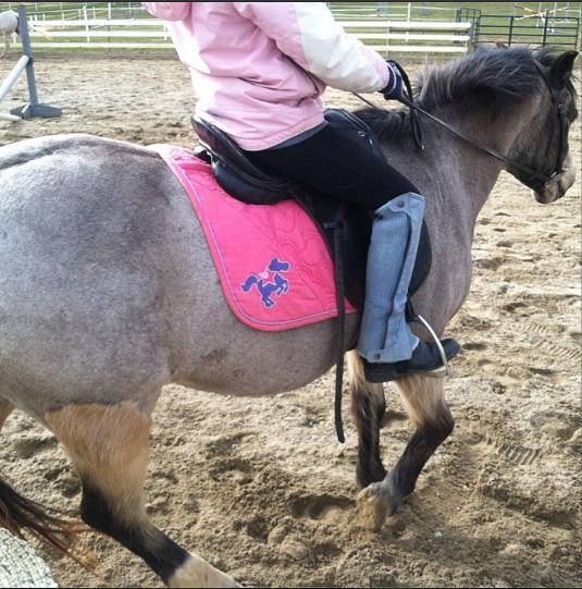 Stop Horsin' Around and Start Horseback Riding!