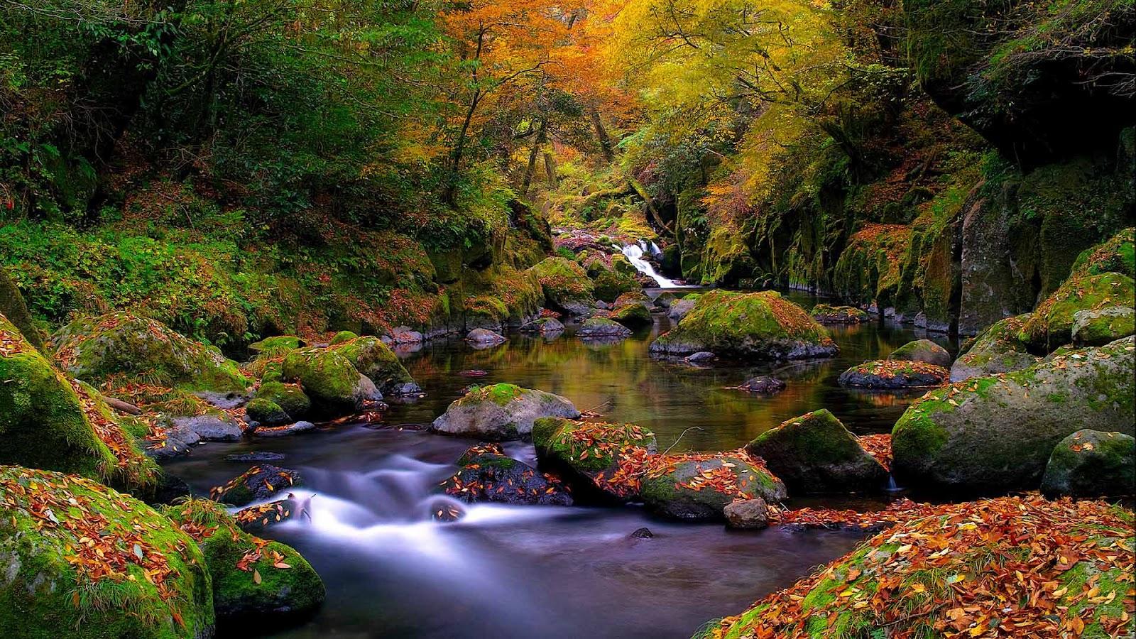 http://3.bp.blogspot.com/-7Qi3Of3VEb0/UCVscIKWHsI/AAAAAAAAATA/zoV2Pz-Ql0A/s1600/hd-landschap-wallpaper-met-herfst-bladeren-en-een-riviertje-met-bomen-herfst-achtergrond-foto.jpg