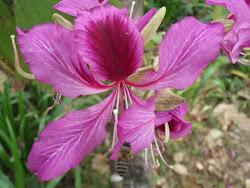 Wild Blossoms