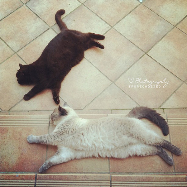Katzen sommer warm