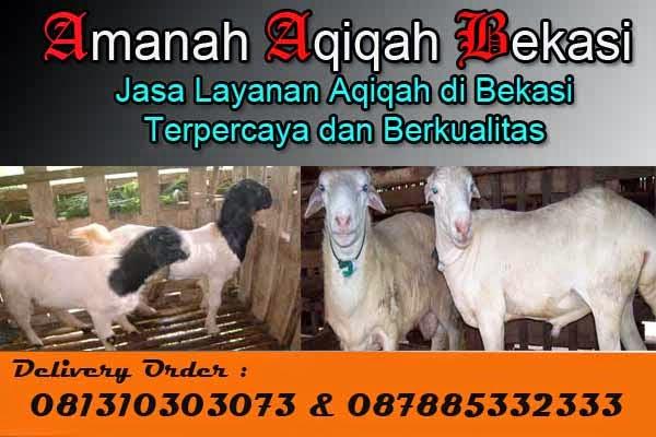 Kambing_Aqiqah_Murah_Bekasi