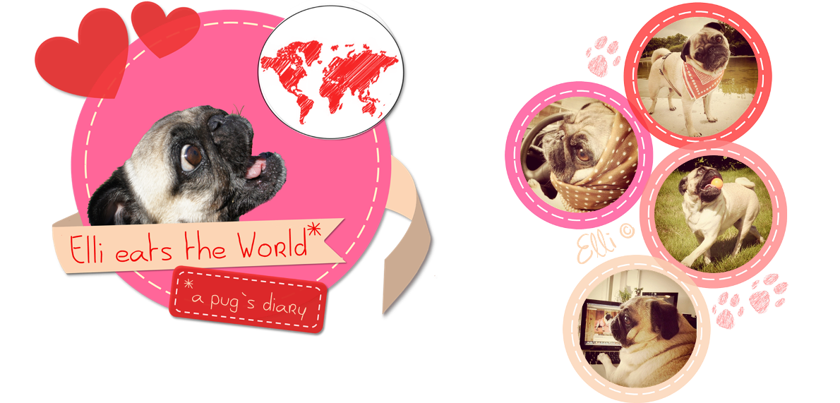 Elli eats the world - a pugs diary