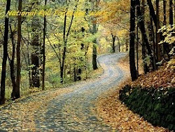 National Fall Foliage Week