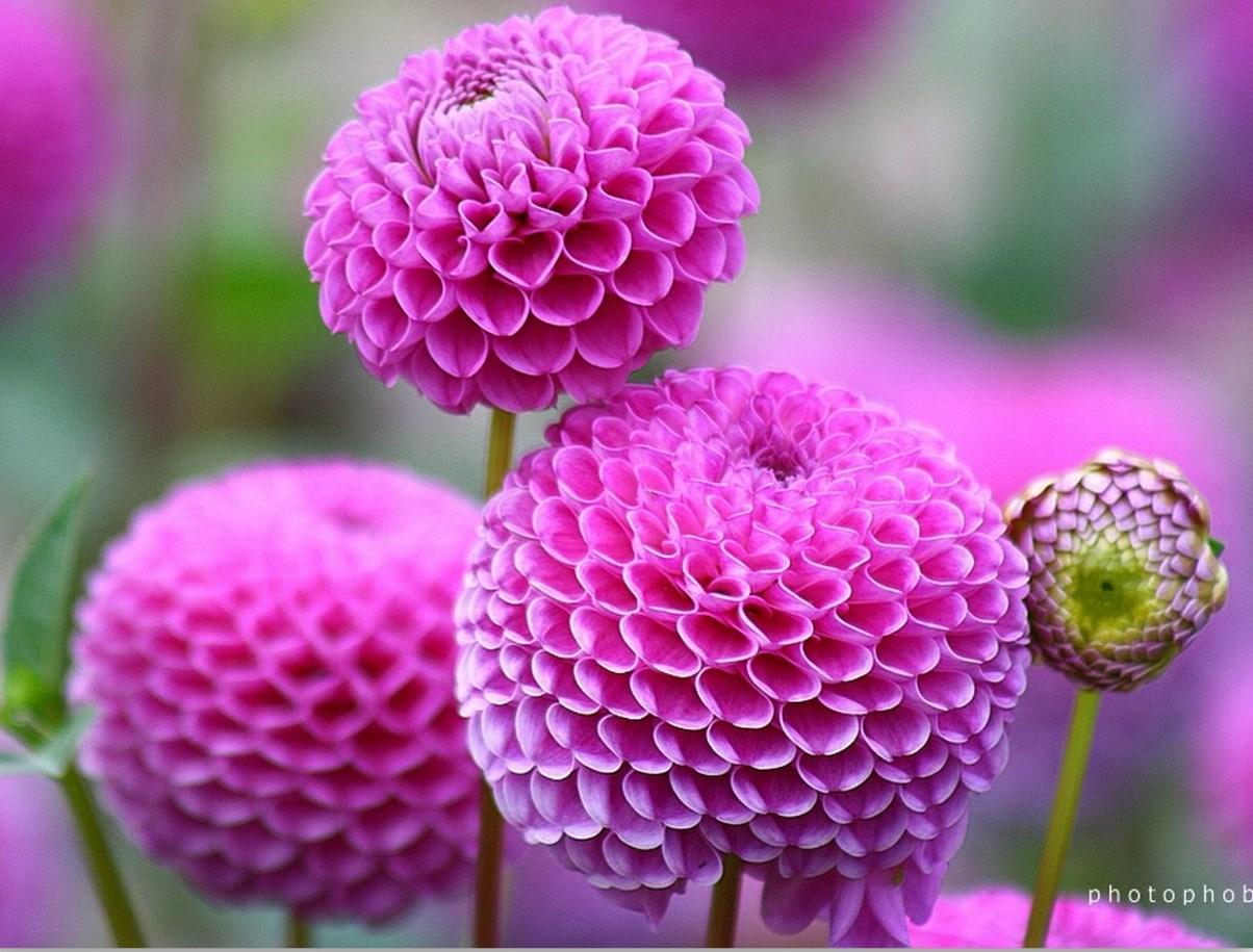 Imagenes De Flores Fotografias Seleccionadas De Flores Naturales Y