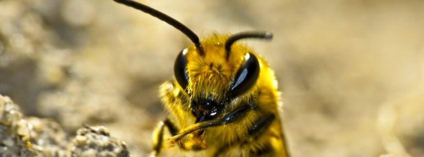 Belle couverture facebook animaux l'abeille